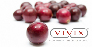 MUSCADINE GRAPE IN VIVIX