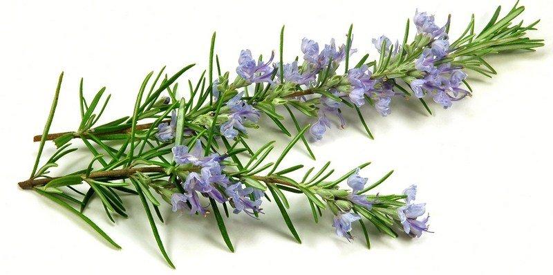 herbal blend 1